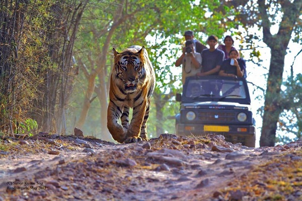 List of Tiger Reserves in India - General Knowledge