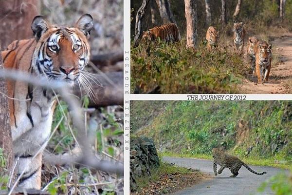 Biligiri Rangaswamy Temple Wildlife Sanctuary