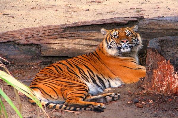 Bor Tiger Reserve