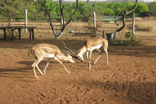 Bori-Satpura Tiger Reserve