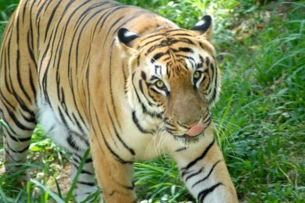 Kalakkad Mundanthurai Tiger Reserve