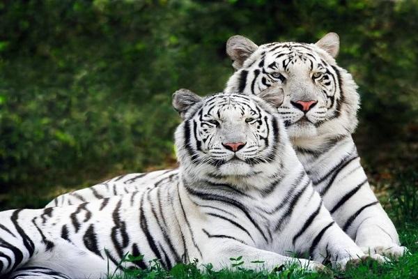 Kawal Tiger Reserve