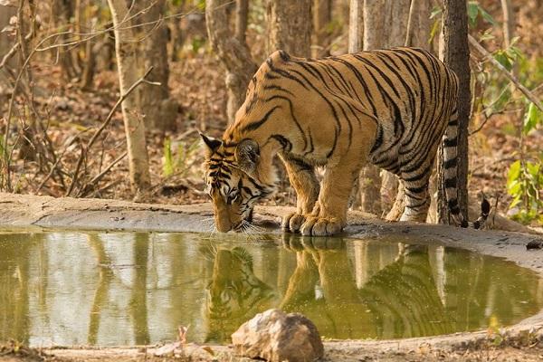 Nagzira-Navegaon Tiger Reserve