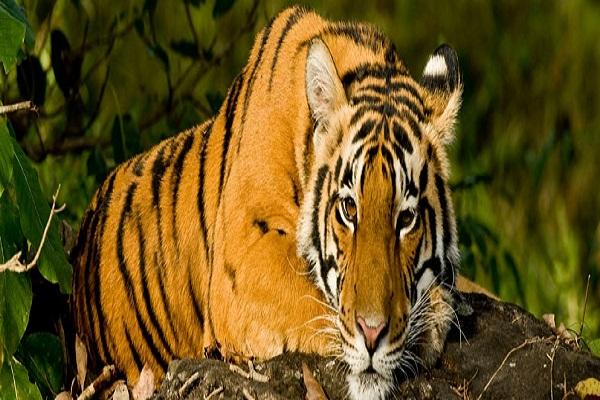 Namdapha Tiger Reserve