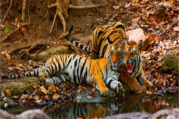 Pakhui Tiger Reserve
