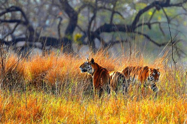 Simlipal Tiger Reserve