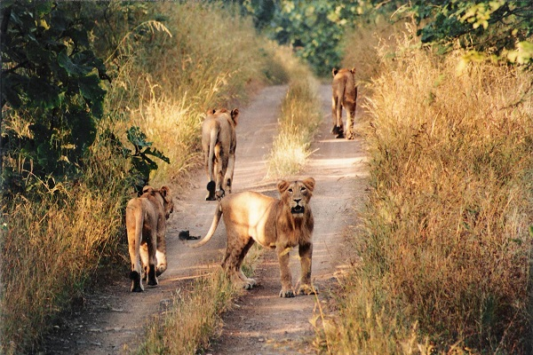 Suhelwa Tiger Reserve