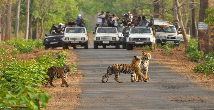 41 amazing tiger reserves in India