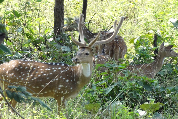 Udanti & Sitanadi Tiger Reserve