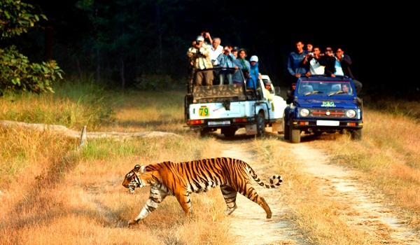 beautiful wildlife safari