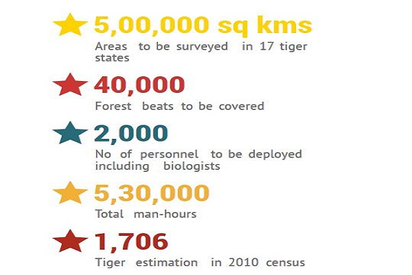 tigers census in India
