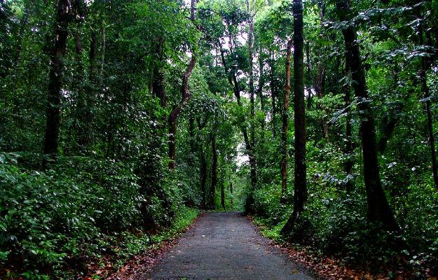 Agumbe Camping